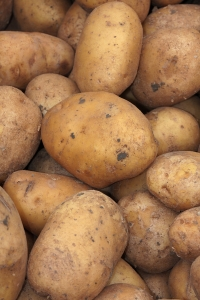 Komunikat – przemieszczanie bulw ziemniaków