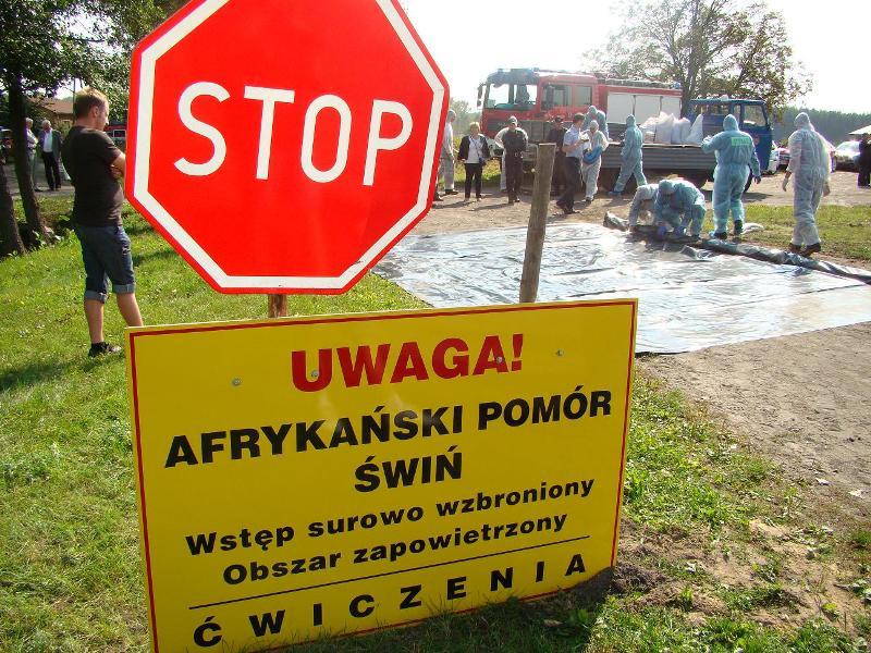 Ćwiczenia zwalczania Afrykańskiego Pomoru Świń w Łasku