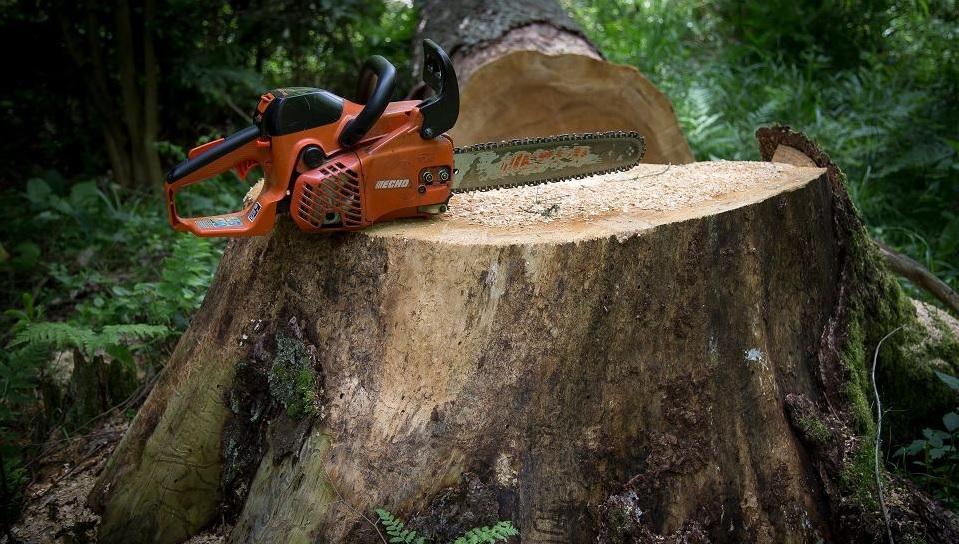 Wycinka drzew przy drodze wojewódzkiej nr 473