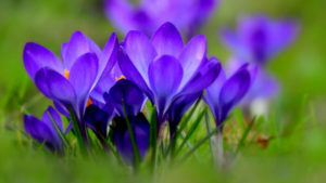 """Konkurs plastyczny """"Wiosna, wiosna, wiosna ach to Ty."""